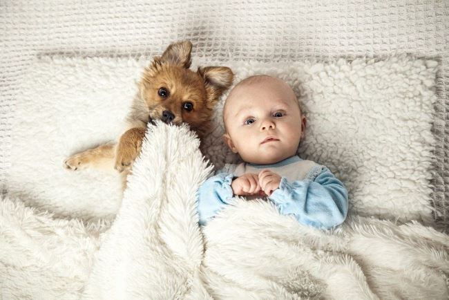 Маленькие дети и домашние животные